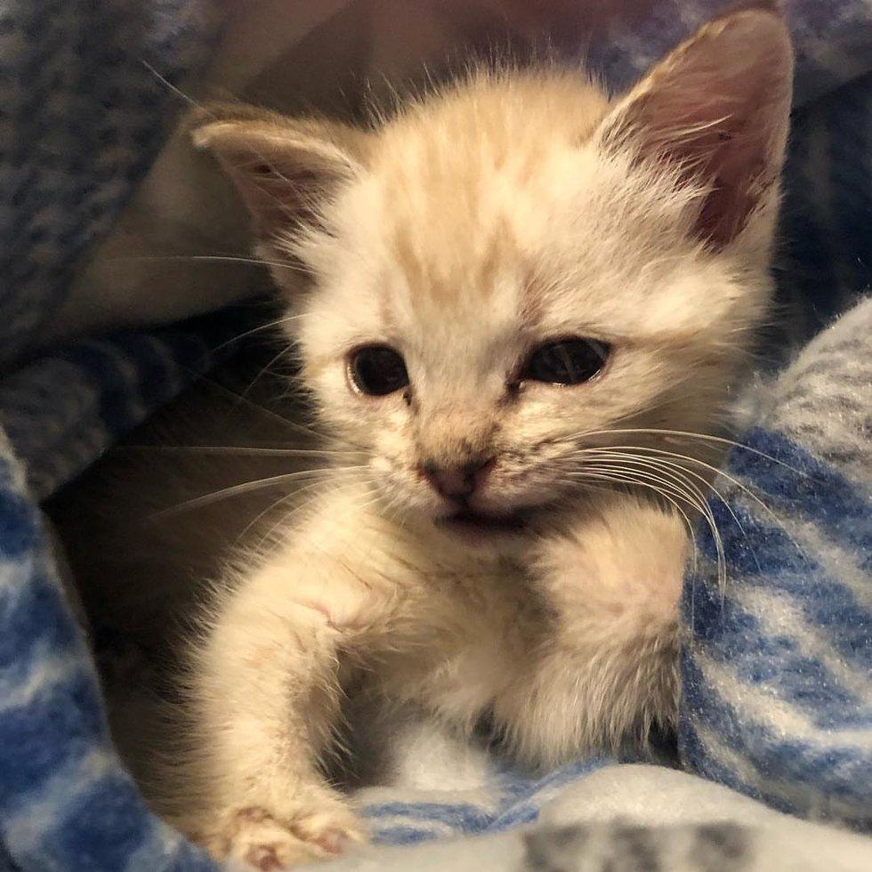 gattino-piccolo-con-coperta