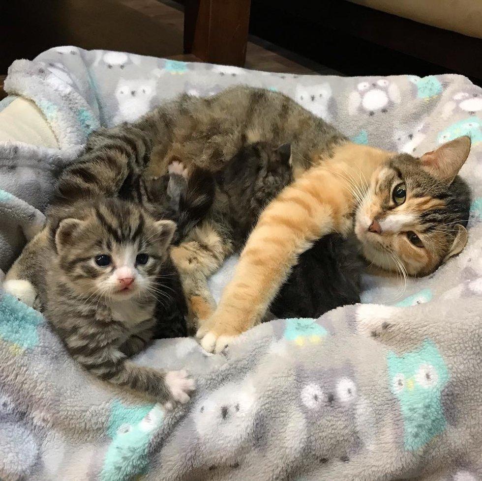 mamma-gatto-con-i-suoi-gattini