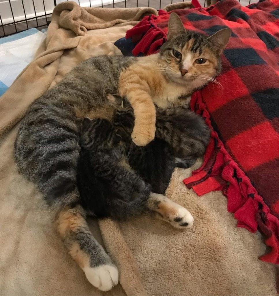 mamma-gatto-con-cuccioli