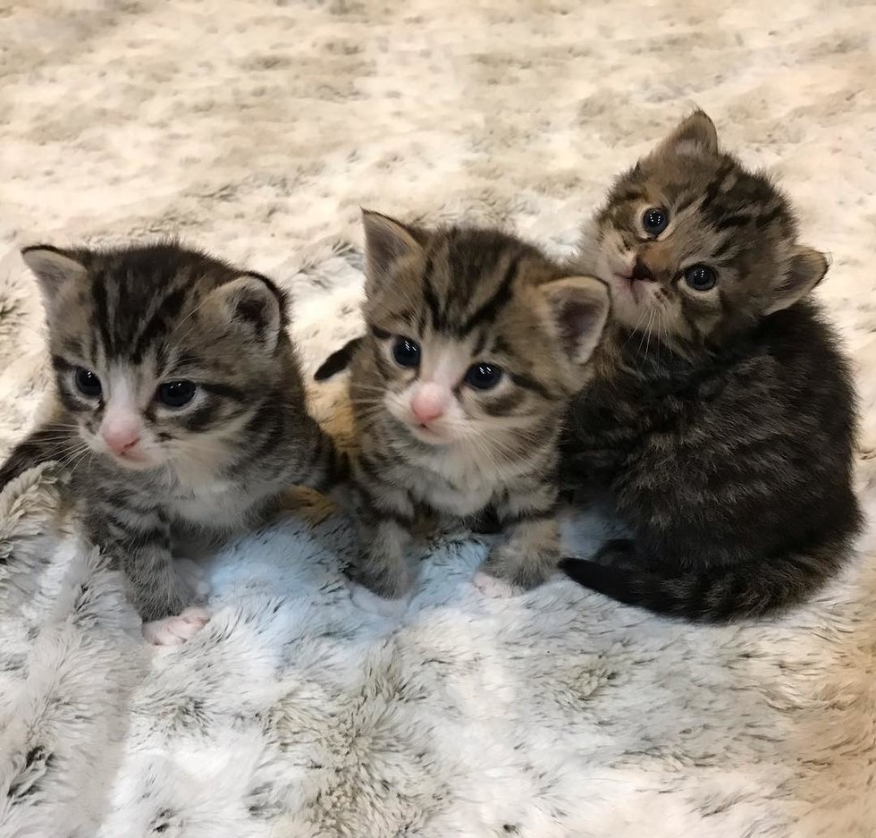 tre-piccoli-gattini