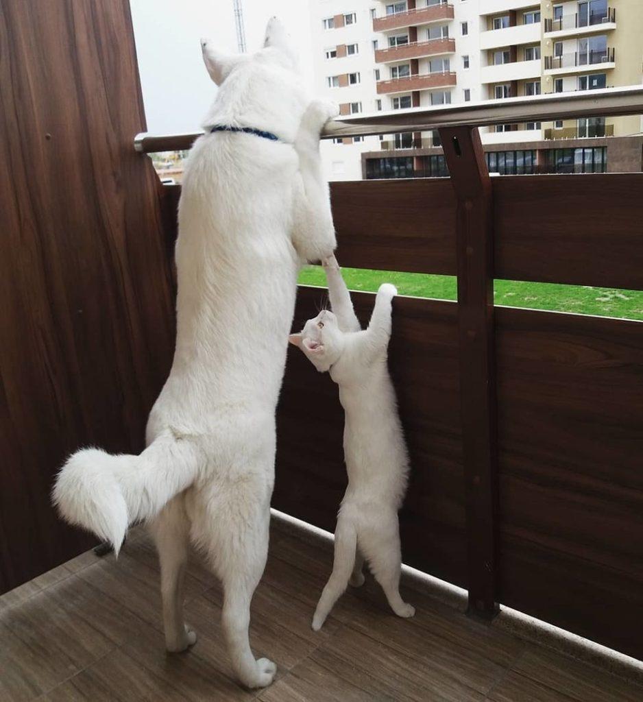 gatto-e-cane-in-terrazzo