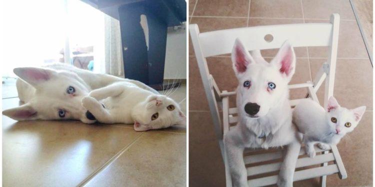 Gatto-e-cane-un'-amicizia-speciale
