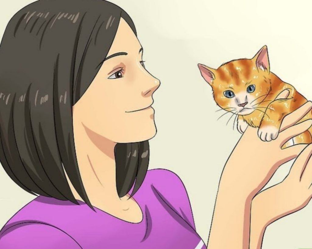 addestrare gattino