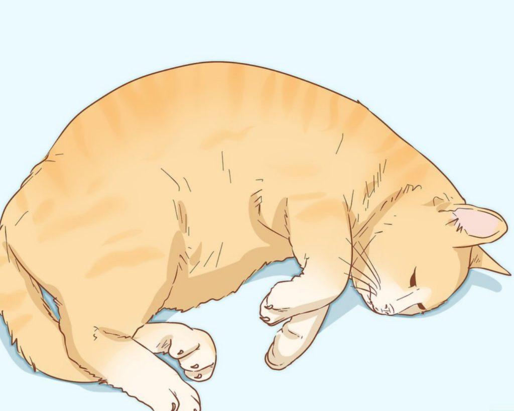 gatto dorme sul fianco
