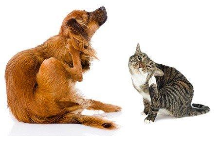 acari-gatto-cane