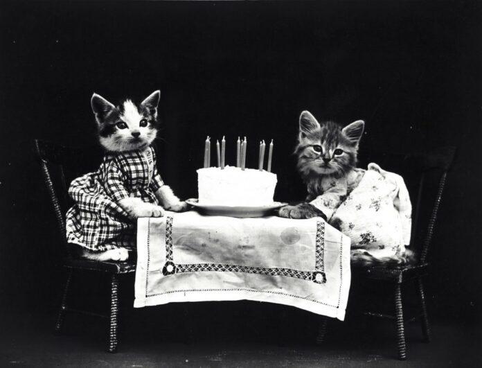 anni-gatti