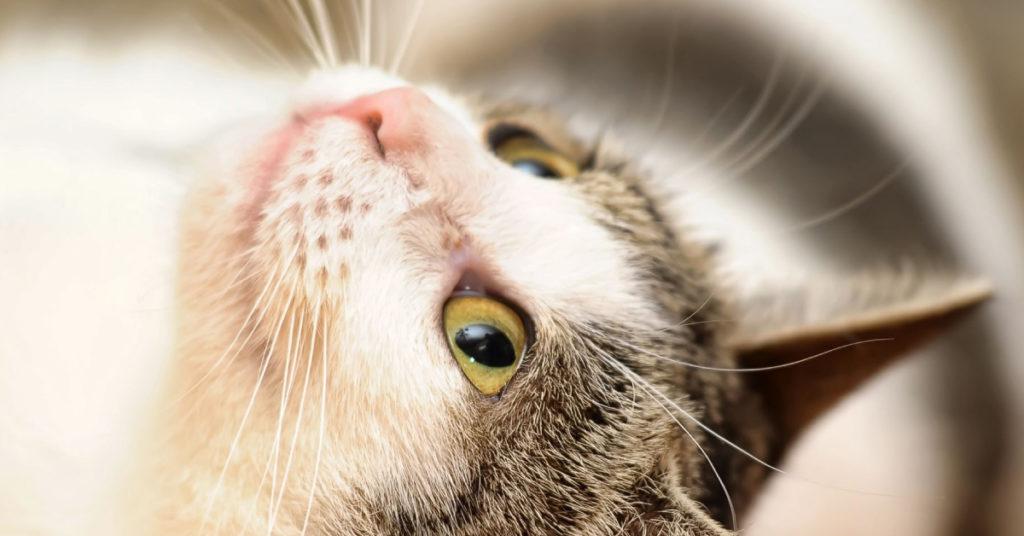 5-modi-in-cui-il-gatto-manifesta-il-suo-amore