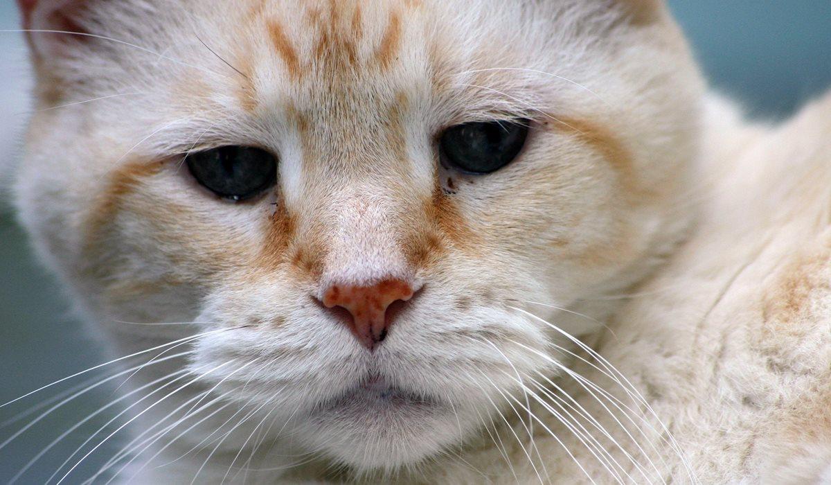 gatto anziano e triste