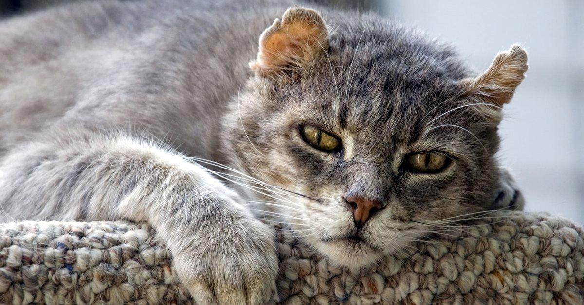 gatto molto anziano e malato