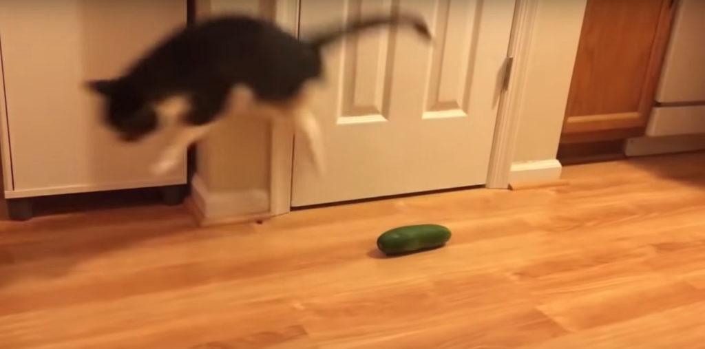 Perché I Gatti Hanno Paura Del Cetriolo Il Mio Gatto è Leggenda