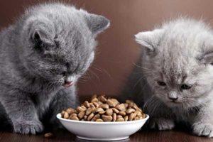 gatti-che-mangiano
