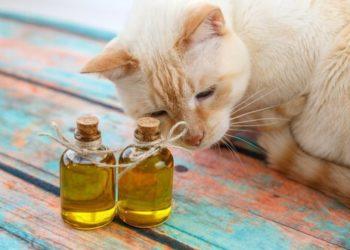 gatti-e-olio-d-oliva