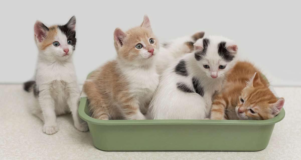 gatti-nella-lettiera
