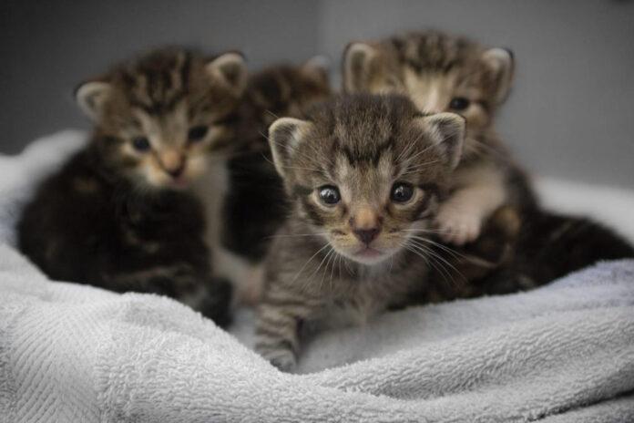 gattini diversi appena nati