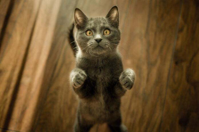 un gattino dolcissimo