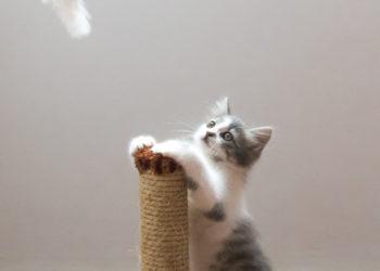 gattino-e-tiragraffi