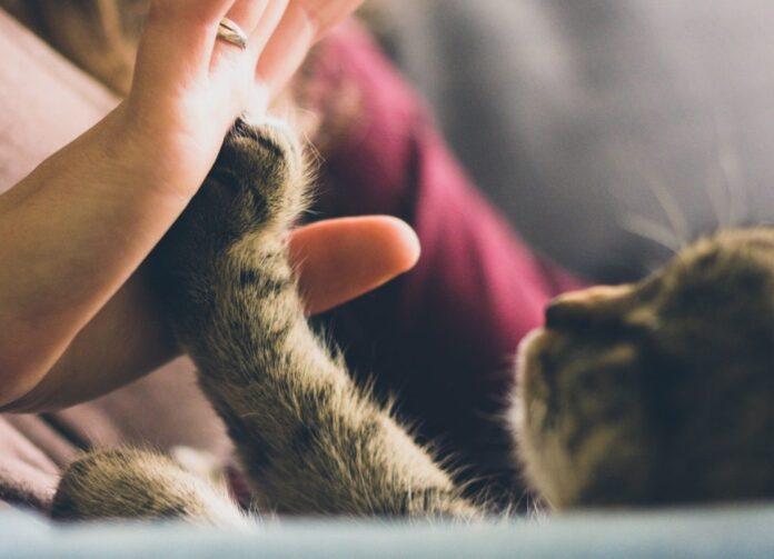 gatto adulto con padrone