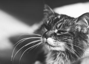 gatto-anziano