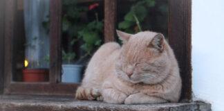 un gatto anziano sulla finestra