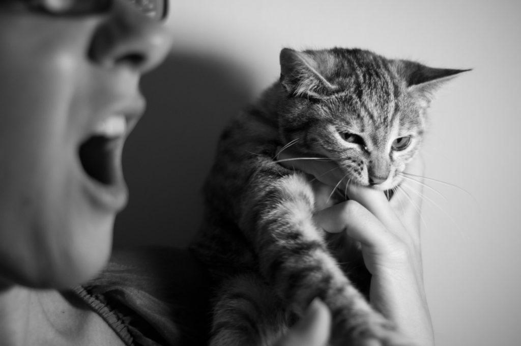 gatto-che-morde