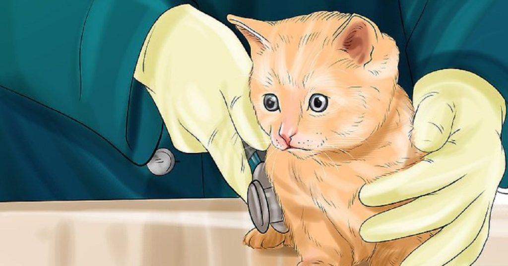 un gatto con coccidiosi