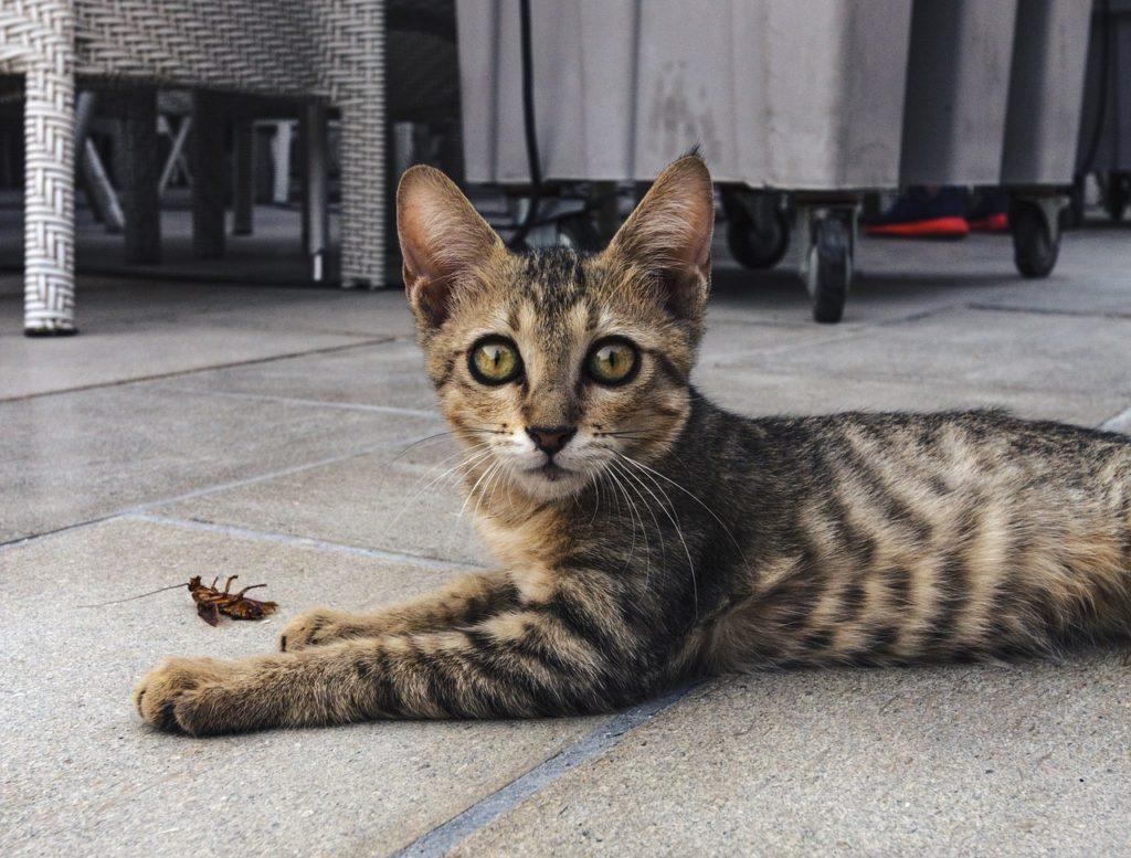 gatto con insetto
