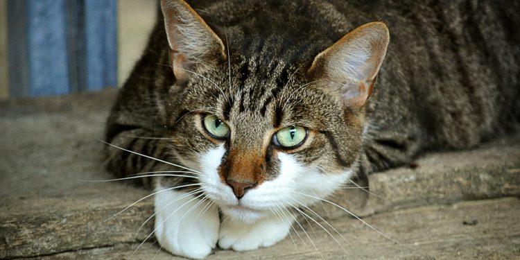 un gatto diffidente