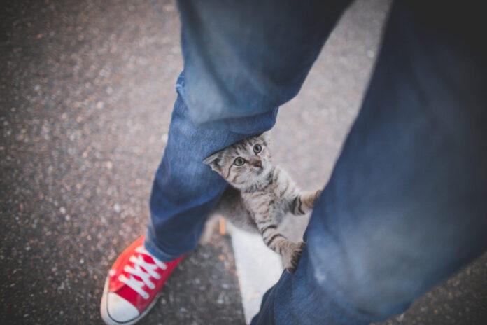 gatto-e-padrone