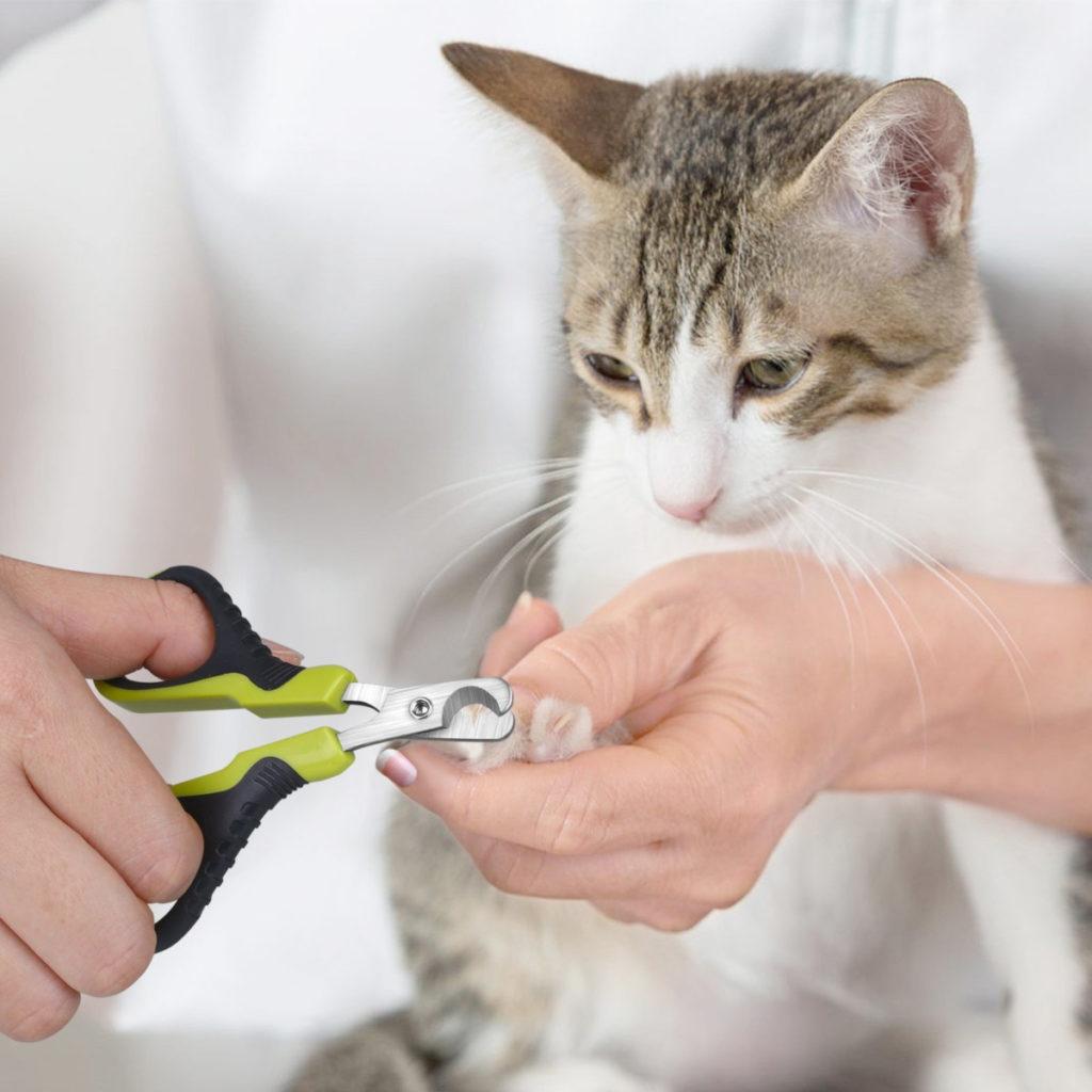 gatto-e-tagliaunghie