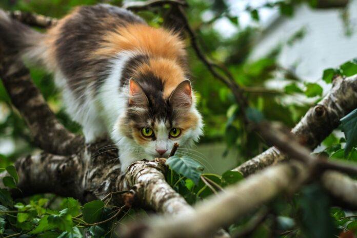 gatto-predatore-albero