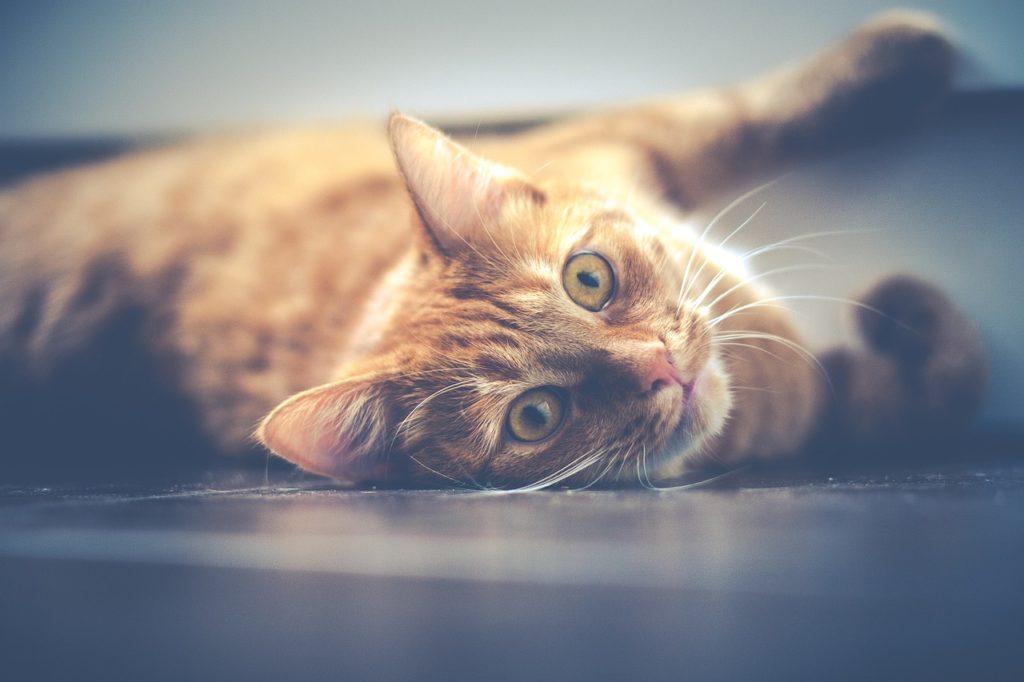 un gatto sdraiato