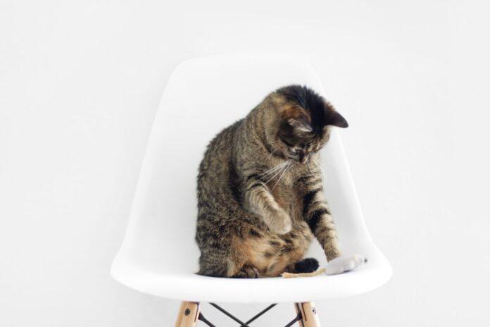 un giochino per gatti fai da te