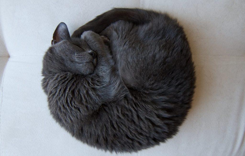 gatto arrotolato
