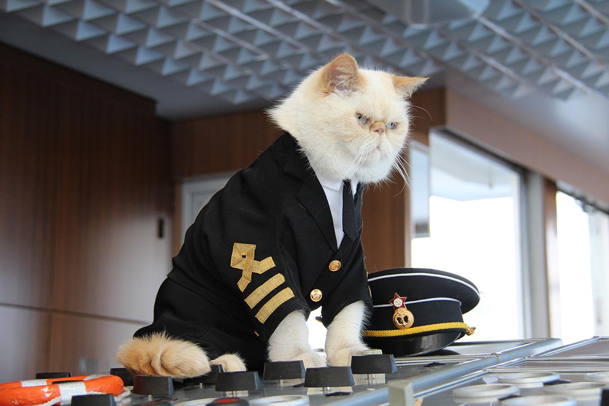 la crociera per amanti dei gatti