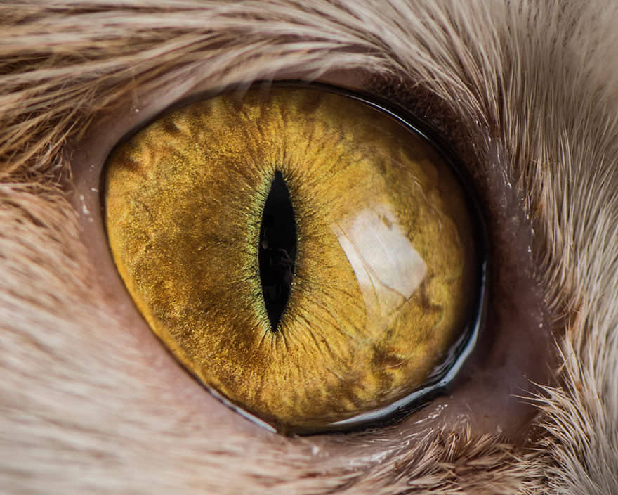 occhio giallo ocra