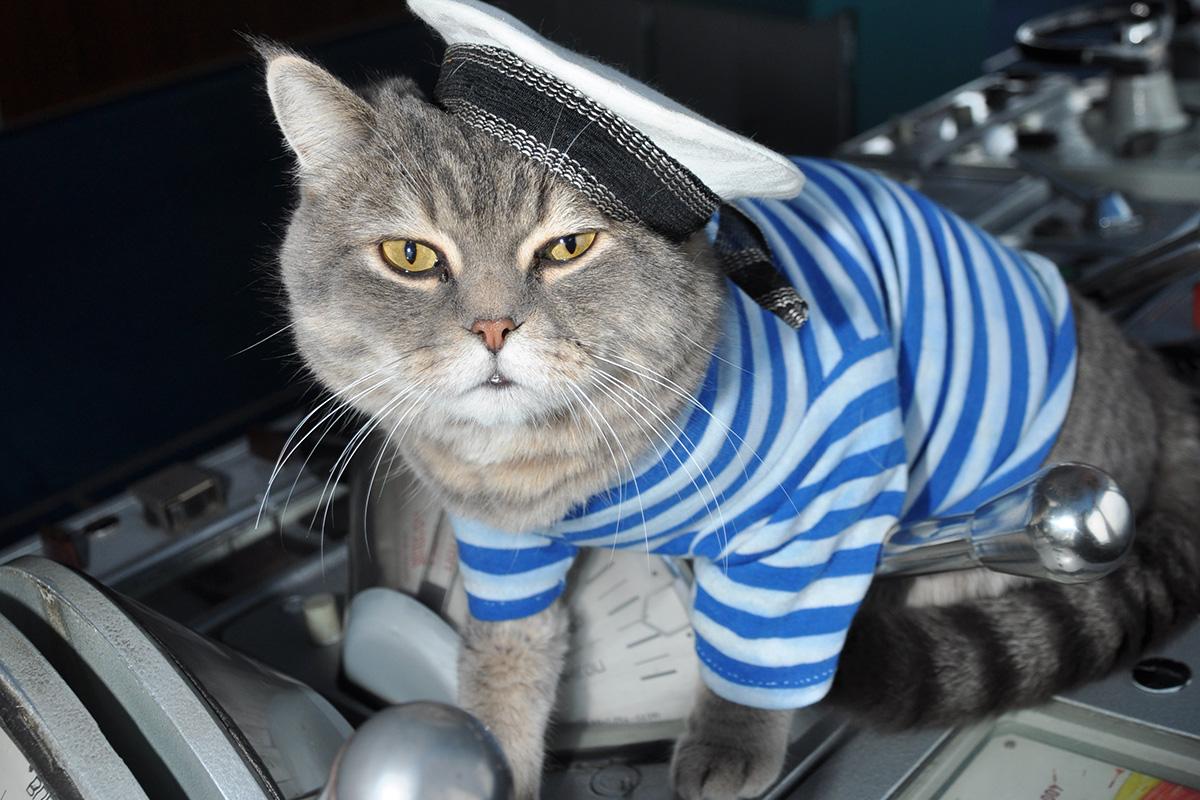 per gli amanti dei gatti