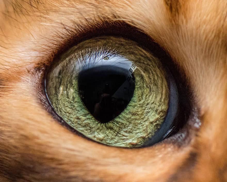 pupilla triangolare
