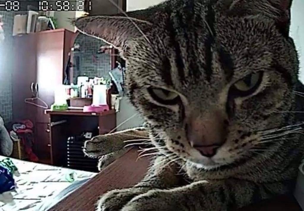 gatto-ripreso-da-telecamera