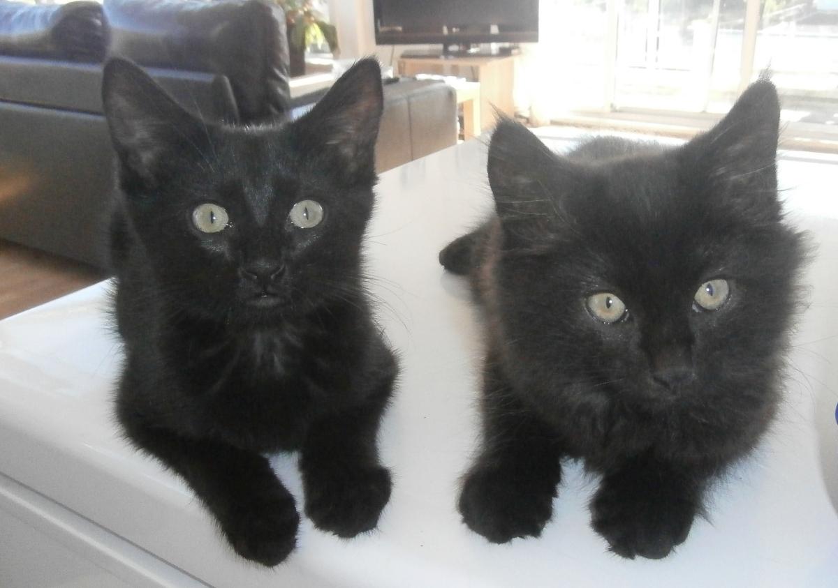 i-due-gattini-neri-julie-e-jack