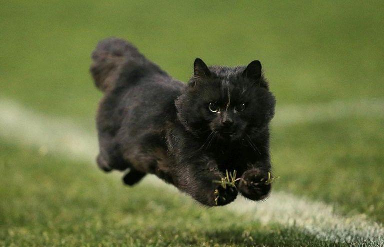 la-gattina-julie-scappa-di-casa