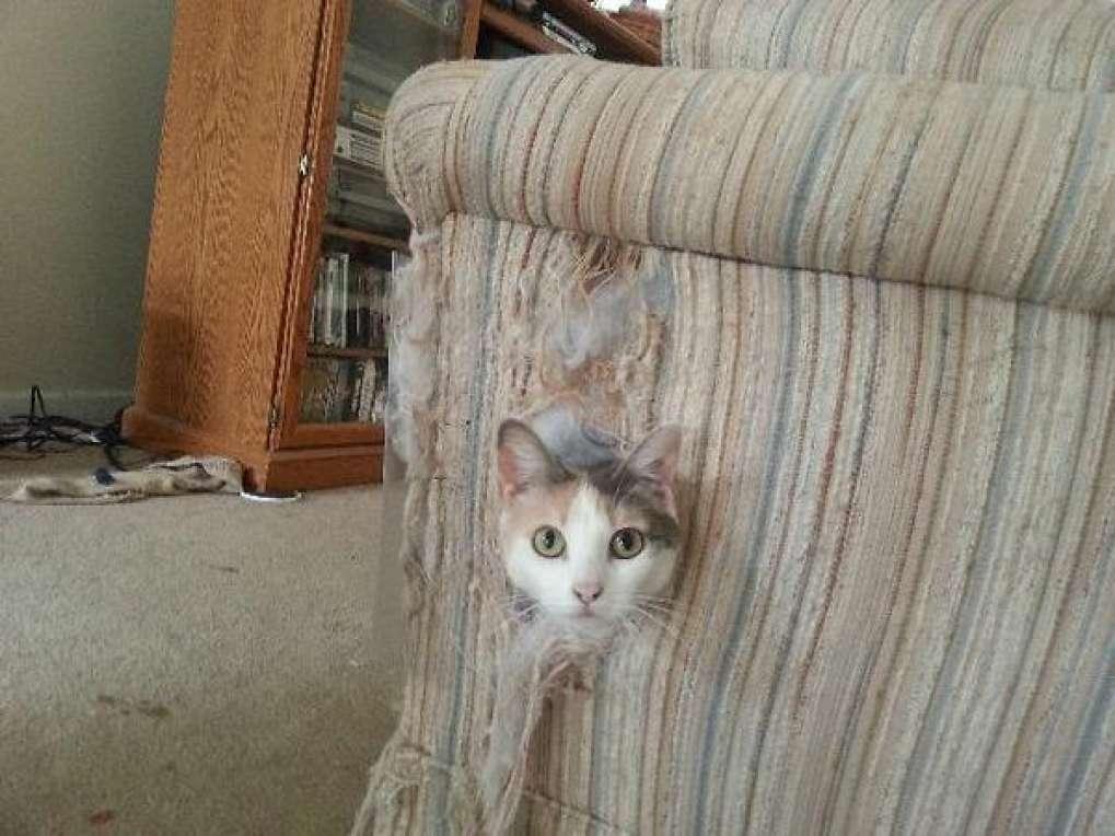 gatto si fa le unghie sul divano