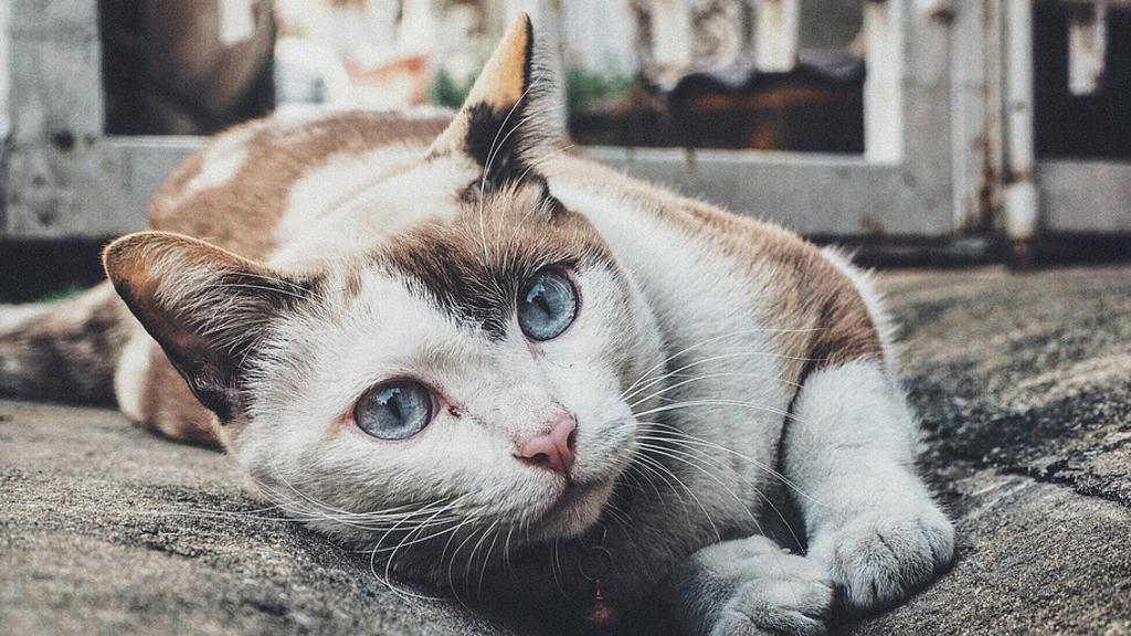 uomo povero vive con gatti
