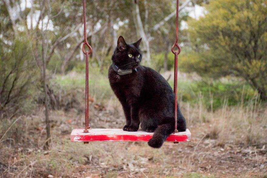 il gatto sull'altalena