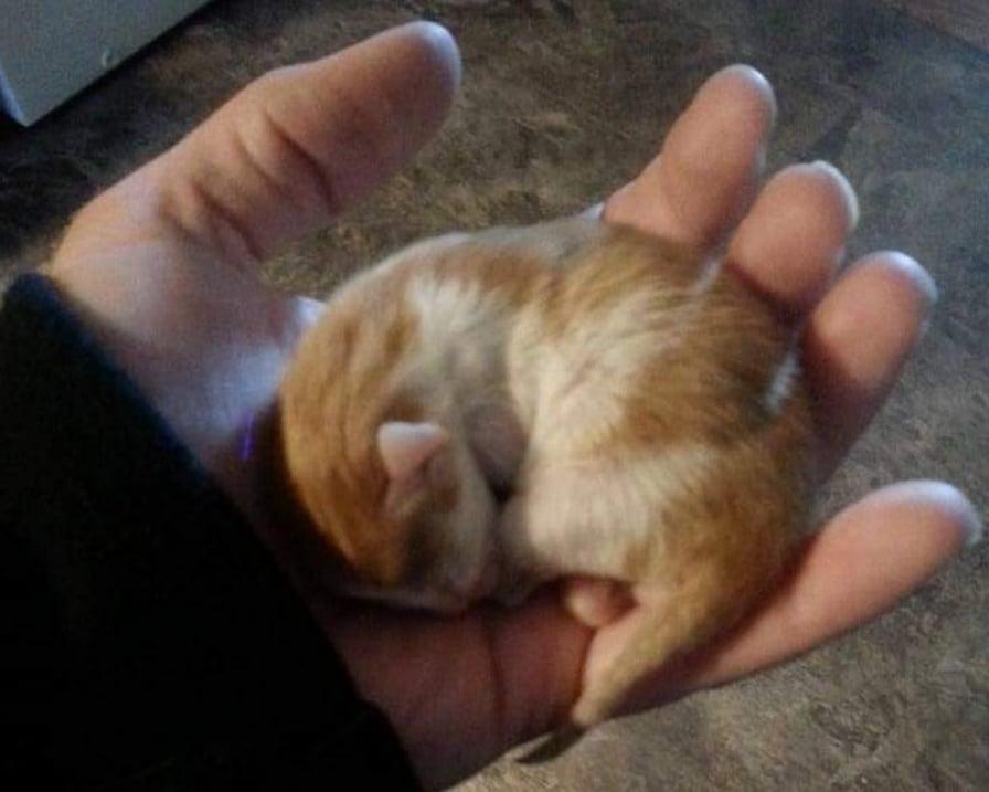 gattino grande come una mano