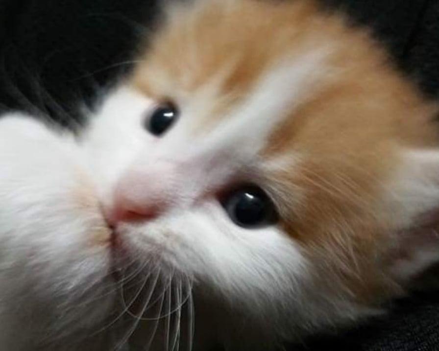 il gattino cresce