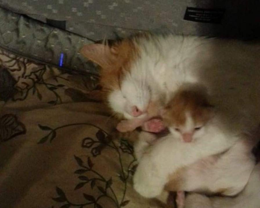 tornata mamma gatta