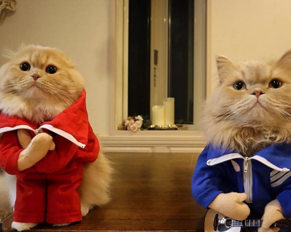 i gatti simpatici
