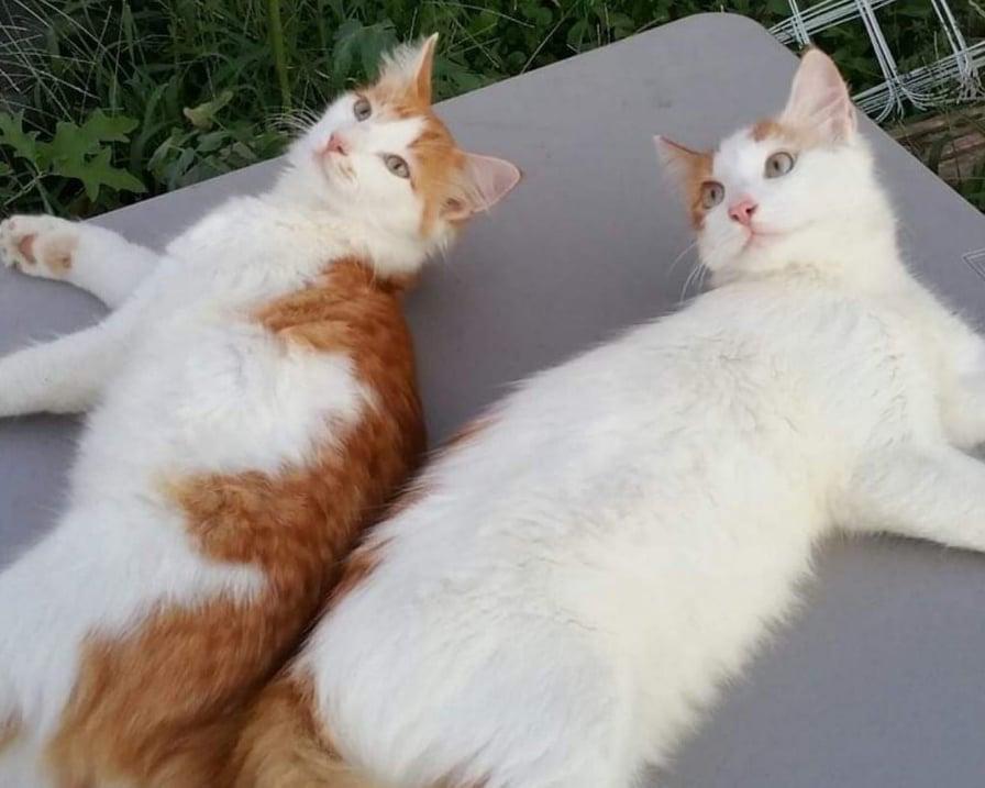 i gatti si sono ritrovati