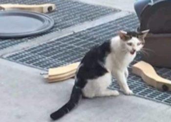 il gattino abbandonato con i suoi effetti