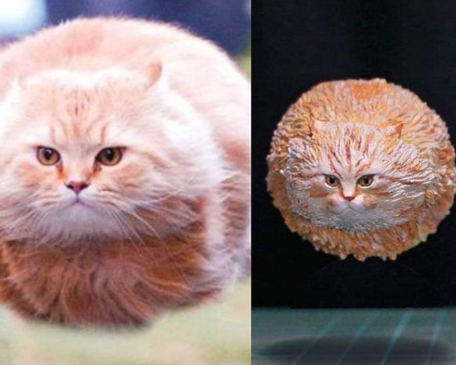 il gatto palla